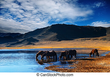 Drinking horses - Mountain landscape with drinking horses
