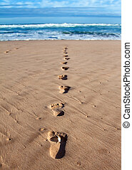Footprints with feather in wet sand in a line towards the...