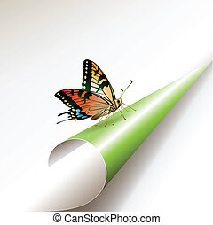 Curled corner with butterfly, vector illustration