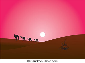 camels are in the desert - the caravan of camels moves in...