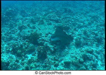 eagl ray underwater video - diving underwater video