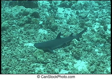 shark underwater video - diving underwater video