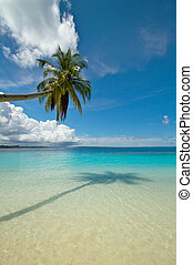 Coconut palm tree on perfect tropical beach - Portrait photo...