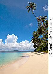 Tall palm tree with clouds on tropical island beach