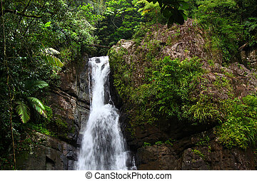 La Mina Falls - Puerto Rico - The beautiful La Mina Falls of...