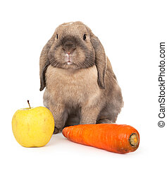 Dwarf rabbit with carrots and apple. In the Oriental...