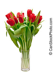 red tulips - beautiful red tulips in vase