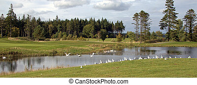 birds on a golf course