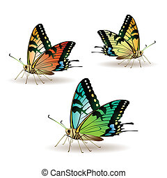 Butterfly collection isolated on white background, vector...
