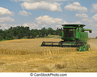 Crop Harvesting - A photograph of a combine harvesting...
