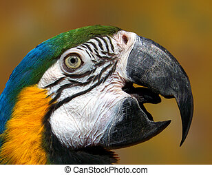 Parrot - Head shot of parrot