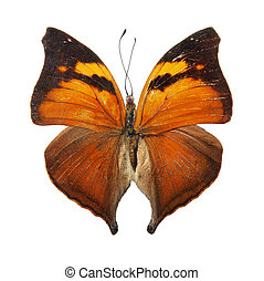 Butterfly on the white background, (isolated)...