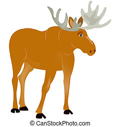 Animal moose - Ungulate animal moose on white background