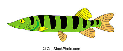pike - fish,pike, lake, minnow, sea, ocean, fishing, ruff,