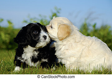 Black and white puppy dogs - Two sweet puppy dogs in nature.