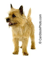 Dog on white background