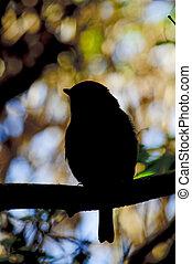 robin silhouette in tree - shape of robin in silhouette...