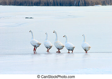 follow the leader on slippery and thin ice