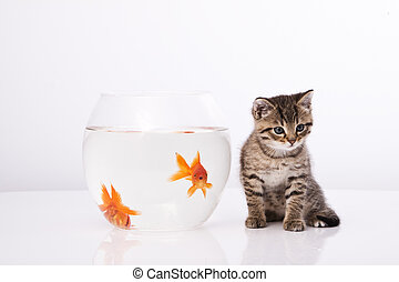 Home cat and a gold fish