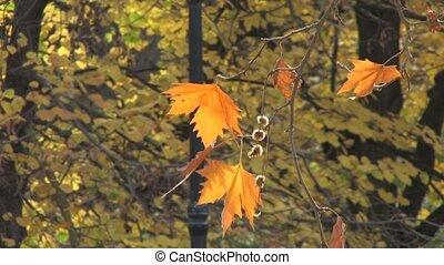 Last autumn leaves