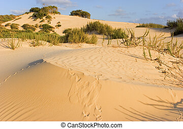 Beautiful dunes. - The sandy dunes covered by bushes and...