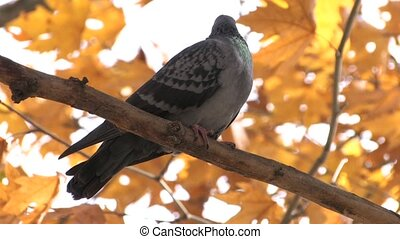 Dove on bare branch