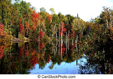 Fall reflection - Fall foilage reflecting on a lake in...