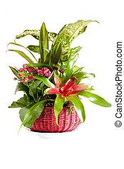 Green Plants Arrangement - Gardening - Pot with indoor green...