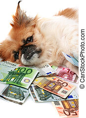 Little dog and money.