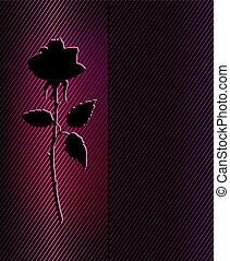 Beautiful black rose