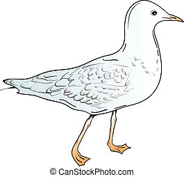 seagull - Isolated drawing bird