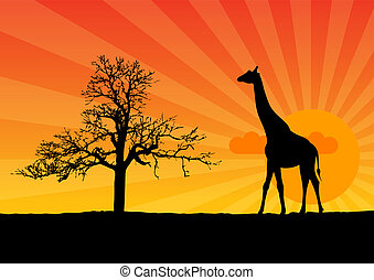 giraffe - Black silhouette of girafee at the sunrise.