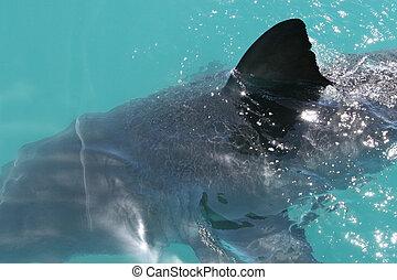 鯊魚, 鰭
