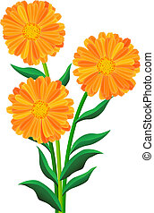 Orange flowers isolated on the white