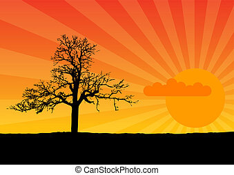 sunset - Black silhouette of tree by sunset