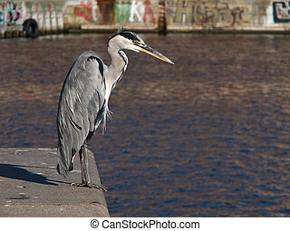 A grey Heron sitting on a quay with water and graffity in...