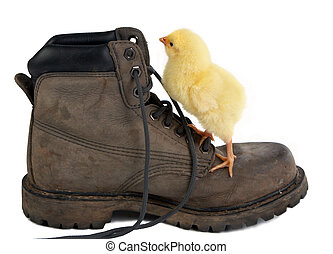 Climbing a shoe