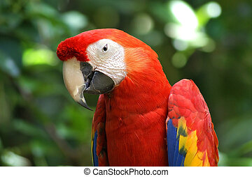 Parrot Close Up - Close view of a parrot focussing on the...
