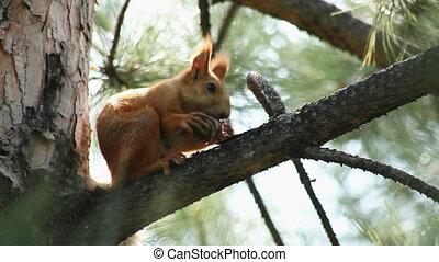 Squirrel 4