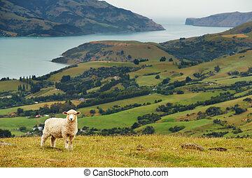 nuevo, Zealand, paisaje
