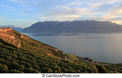 Lavaux vineyards, Switzerland - Famous and protected Lavaux...