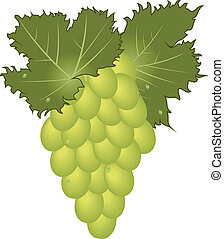 clous-up green grape isolated