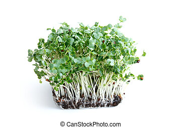 Watercress - Water cress on a background