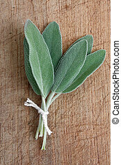 Sage on a wooden background