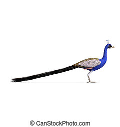 gorgeous male peacock. 3D rendering with clipping path and shadow over white