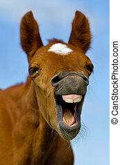 Laughing Horse - Horse with mouth open looking like. It with...
