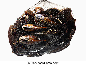 Net of mussels - A picture of a net of mussels over white...