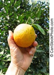 laranja, mão