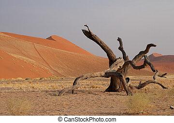 Dune 45 near Sossusvlei, Namibia