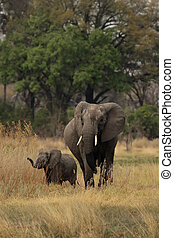 Elephant mother with cub in the Okavango Delta, Botswana.
